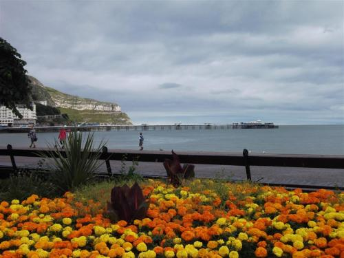 Llandudno Promenade Flowers August 2012