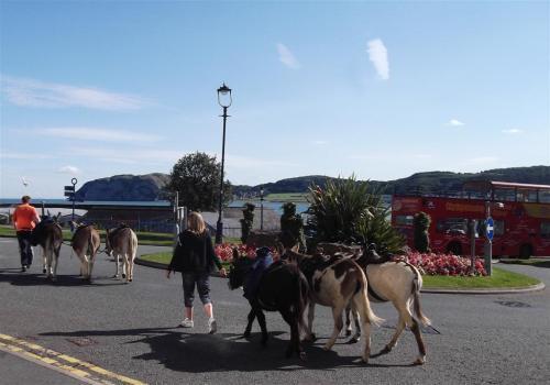 Donkey Rides Llandudno