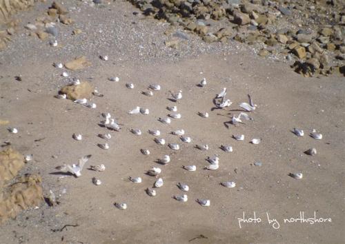 Picture of seagulls Llandudno