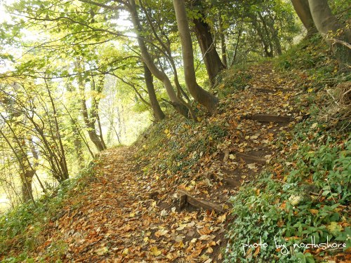 Haulfre-Gardens-path