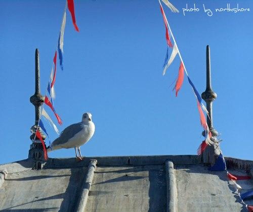 Seagull-Llandudno